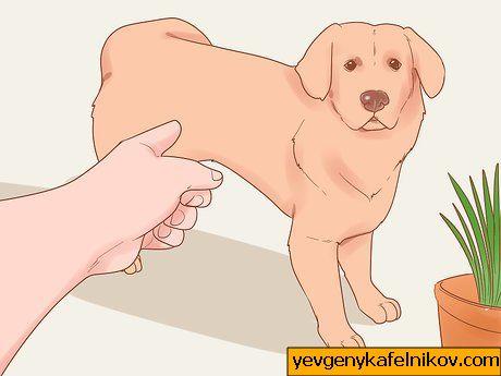 kuum koera kaalulangus oli tommates kaalulangus