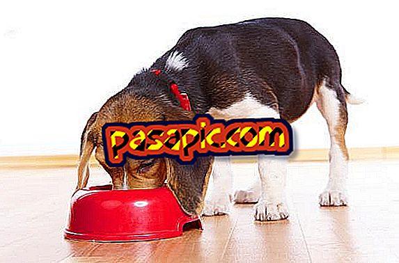 kuidas ravida koerte kaalulangust