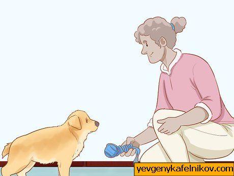 kuidas ma oma koera libiseda