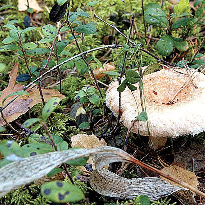 seened kaalulanguse kasu verimark kaalulangus sukkpuksid